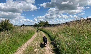 Image of https://bristol-barkers.co.uk/walks/priddy-circular/