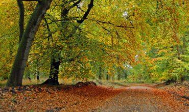 Image of https://bristol-barkers.co.uk/walks/savernake-forest/