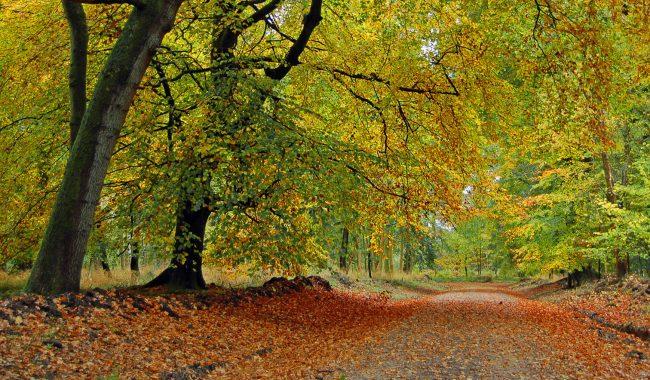 Image of Savernake Forest