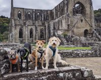 Image for Tintern Abbey