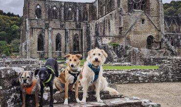 Image of https://bristol-barkers.co.uk/walks/tintern-abbey/