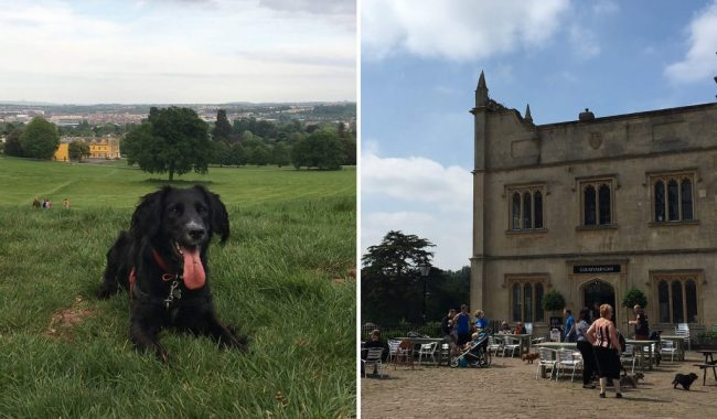 Image of Ashton Court Estate & Ashton Court Cafe