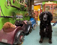 Image for Cotswold Motoring Museum & Toy Collection