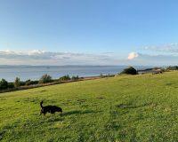 Image for Kilkenny Fields